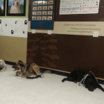 Sandy instructing three dogs to lay down during their positive reinforcement training