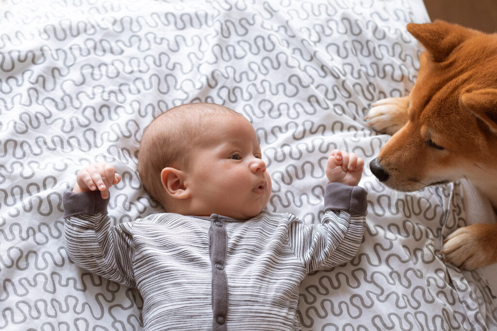 Newborn baby and friendly Shiba inu dog in home bedroom.