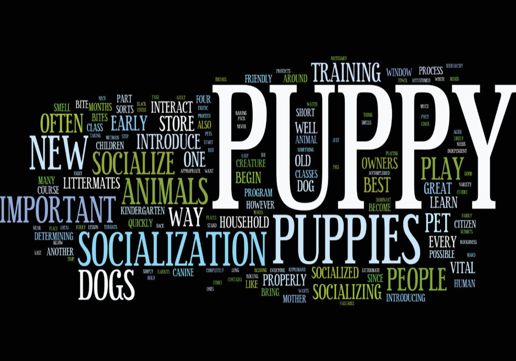 Compatible Companions Dogs Services teaches how puppies can learn the methods of socializing around new things.