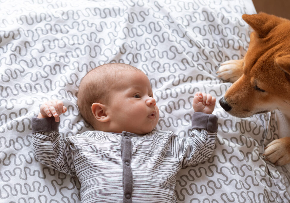 Newborn baby boy and friendly Shiba inu dog in home bedroom.