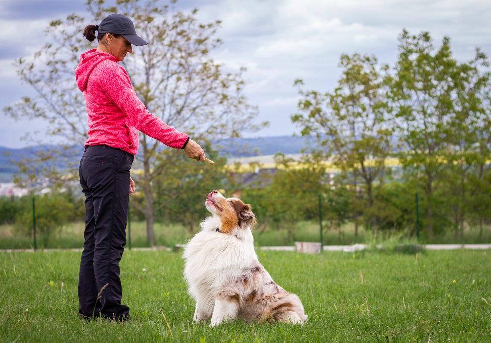An dog trainer using dog biscuits for positive reinforcement training